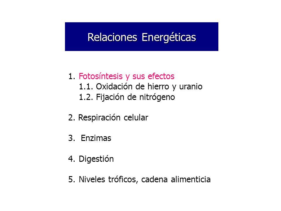 Ecuación de la Respiración Celular: 2 ATP (energía de activación) C 6 H 12 O 6 + 6O 2 6CO 2 + 6H 2 O Produce 686KCal de energía Salen total de 36-38 ATP