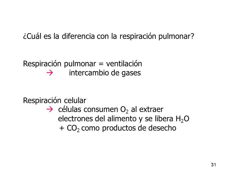 31 ¿Cuál es la diferencia con la respiración pulmonar? Respiración pulmonar = ventilación intercambio de gases Respiración celular células consumen O