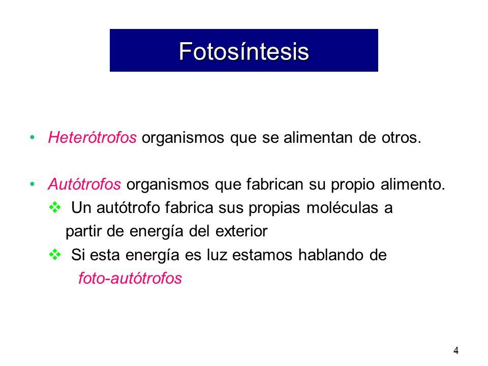 4 Fotosíntesis Heterótrofos organismos que se alimentan de otros. Autótrofos organismos que fabrican su propio alimento. Un autótrofo fabrica sus prop