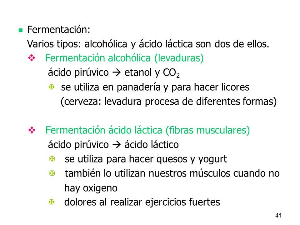 41 Fermentación: Varios tipos: alcohólica y ácido láctica son dos de ellos. Fermentación alcohólica (levaduras) ácido pirúvico etanol y CO 2 se utiliz