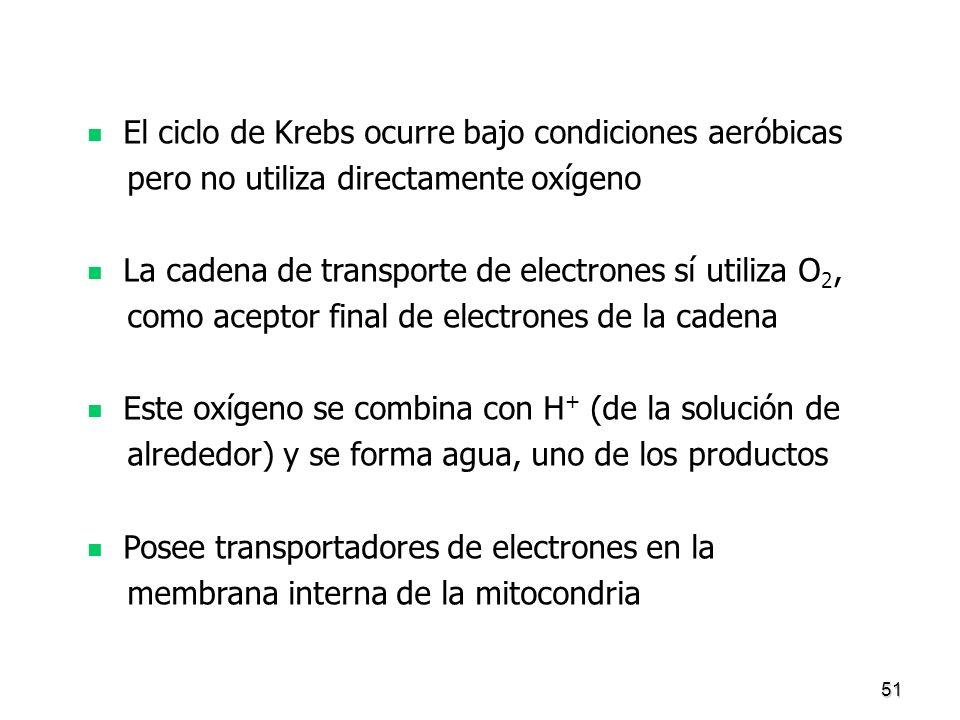 51 El ciclo de Krebs ocurre bajo condiciones aeróbicas pero no utiliza directamente oxígeno La cadena de transporte de electrones sí utiliza O 2, como