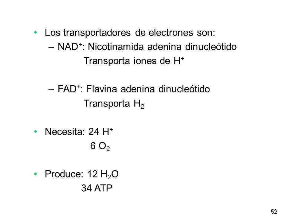 52 Los transportadores de electrones son: –NAD + : Nicotinamida adenina dinucleótido Transporta iones de H + –FAD + : Flavina adenina dinucleótido Tra