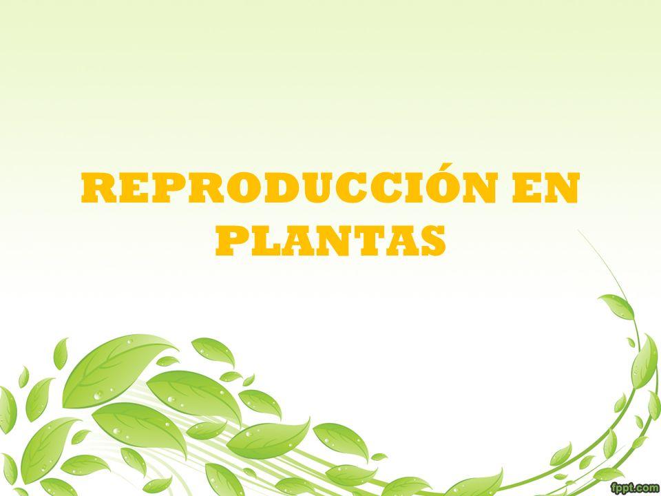Reproducción Asexual De un organismo se desprende una sola célula o trozos del cuerpo ya desarrollado, que por procesos mitóticos, son capaces de formar un individuo completo genéticamente idéntico a él.