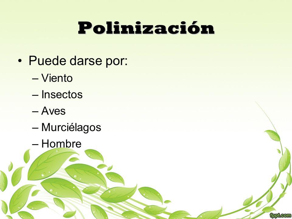 Polinización Puede darse por: –Viento –Insectos –Aves –Murciélagos –Hombre