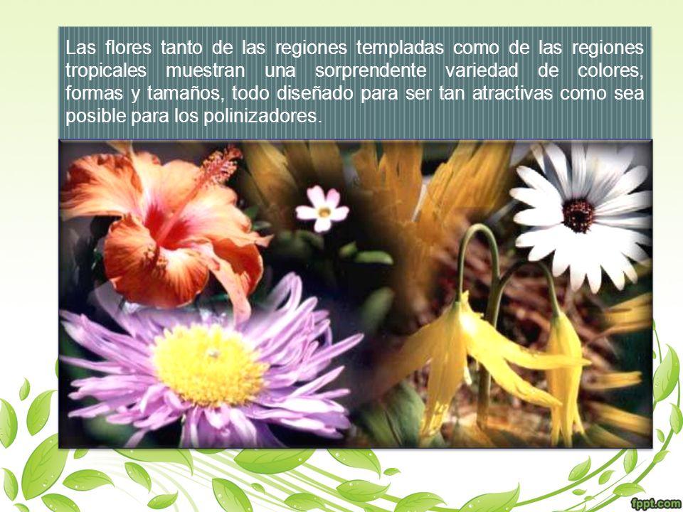 Las flores tanto de las regiones templadas como de las regiones tropicales muestran una sorprendente variedad de colores, formas y tamaños, todo diseñ