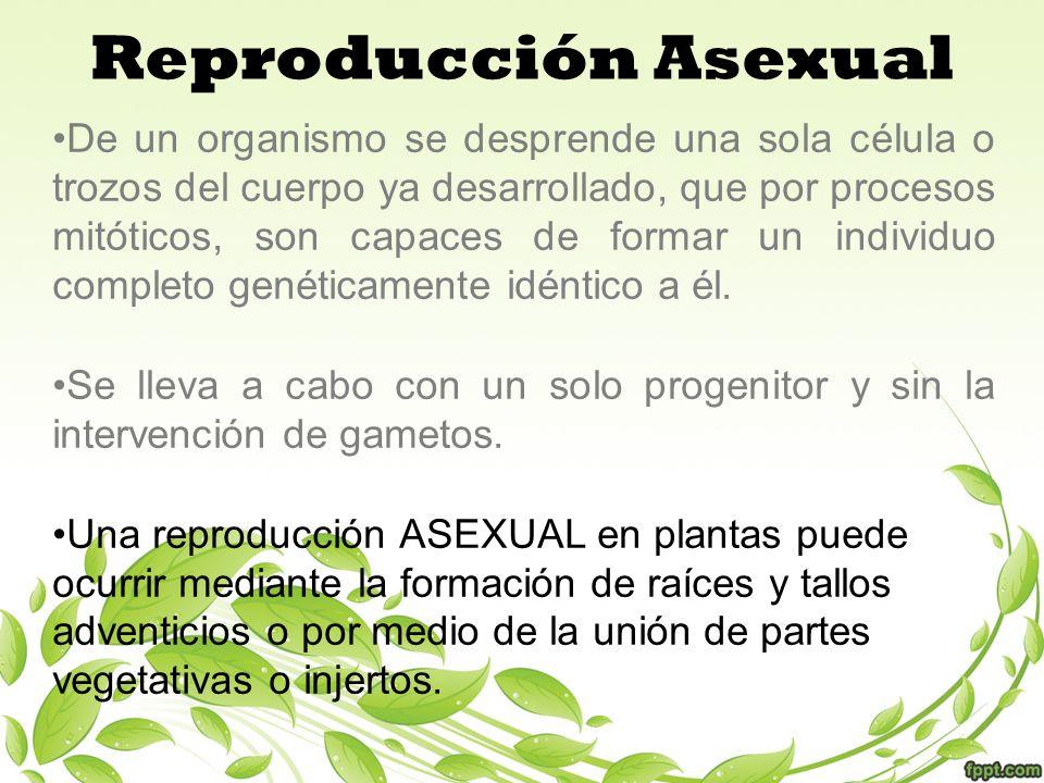 Reproducción Asexual De un organismo se desprende una sola célula o trozos del cuerpo ya desarrollado, que por procesos mitóticos, son capaces de form