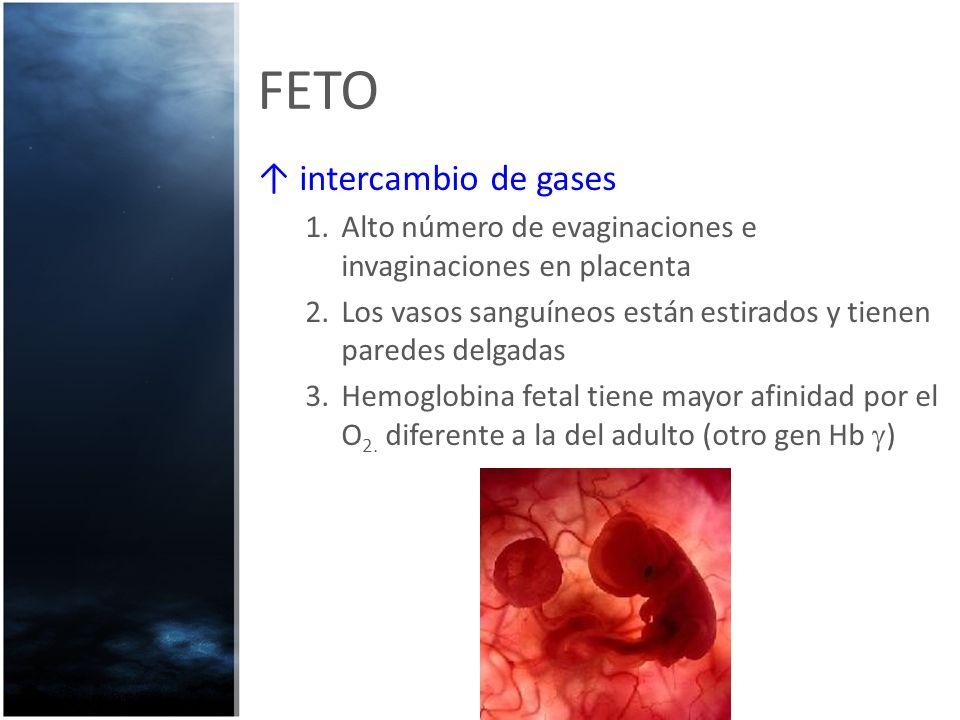 FETO intercambio de gases 1.Alto número de evaginaciones e invaginaciones en placenta 2.Los vasos sanguíneos están estirados y tienen paredes delgadas