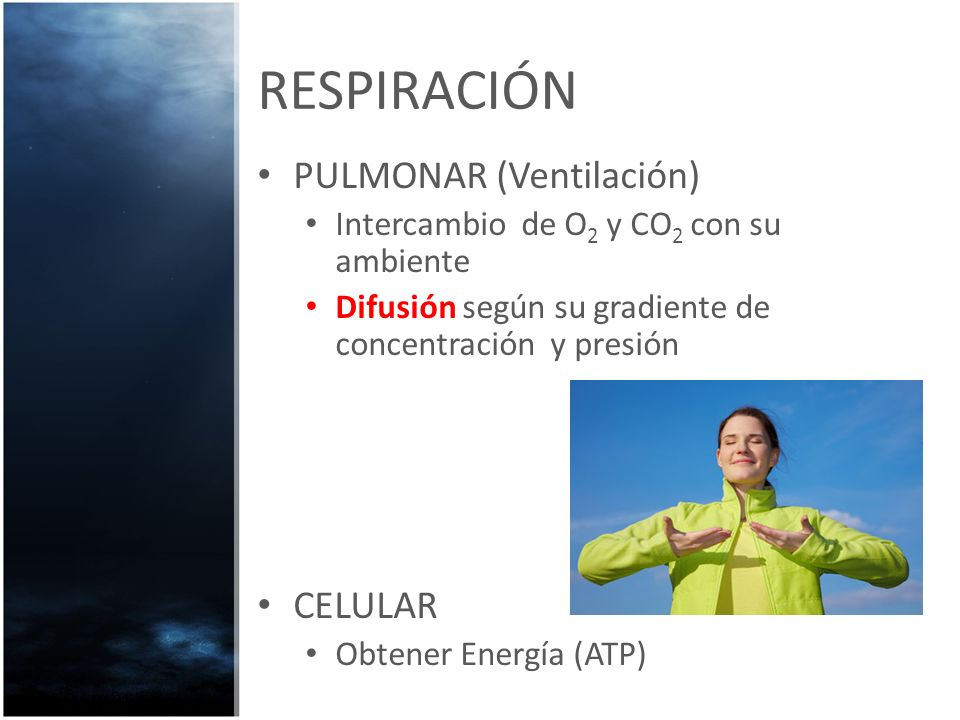 RESPIRACIÓN PULMONAR (Ventilación) Intercambio de O 2 y CO 2 con su ambiente Difusión según su gradiente de concentración y presión CELULAR Obtener En
