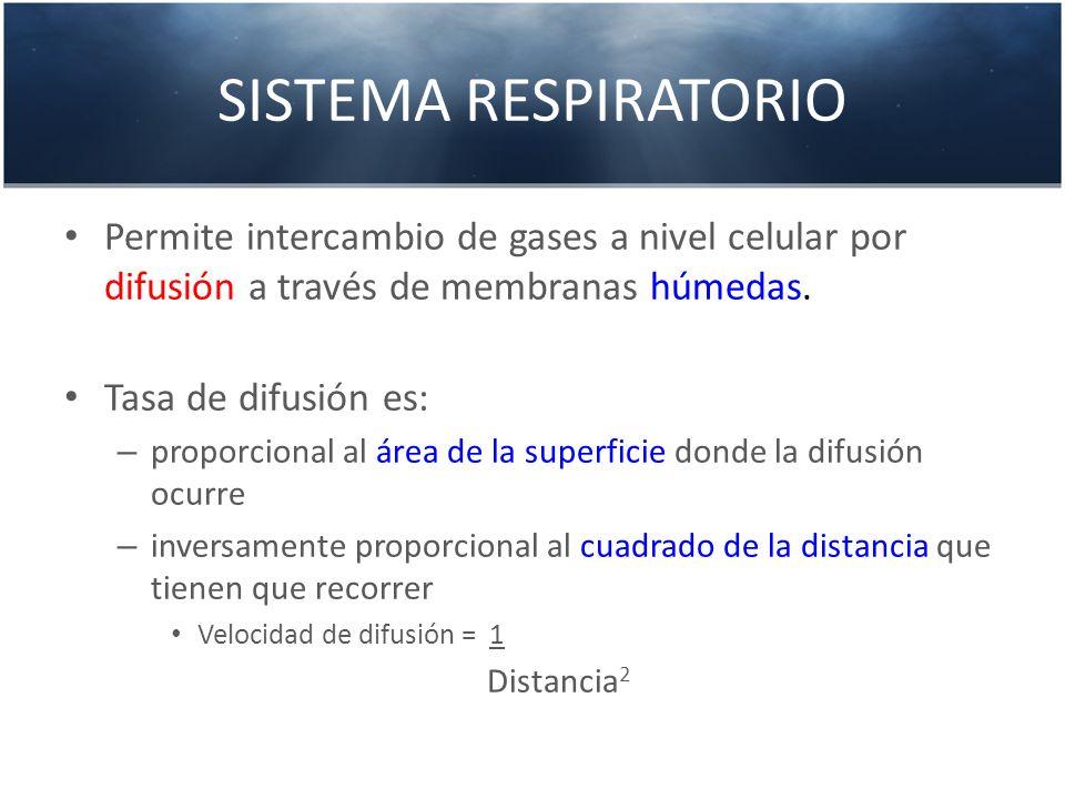 SISTEMA RESPIRATORIO Permite intercambio de gases a nivel celular por difusión a través de membranas húmedas. Tasa de difusión es: – proporcional al á