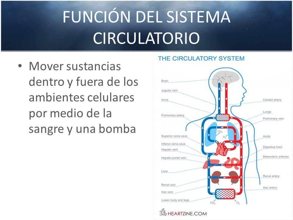 FUNCIÓN DEL SISTEMA CIRCULATORIO Mover sustancias dentro y fuera de los ambientes celulares por medio de la sangre y una bomba