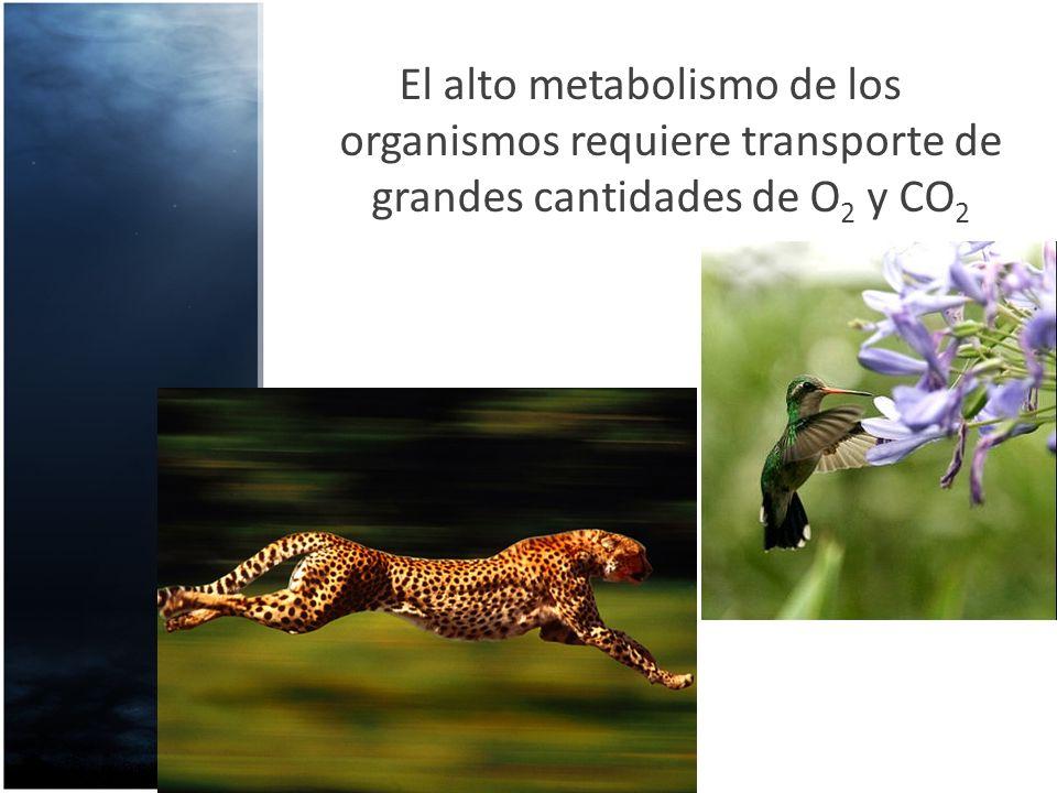 El alto metabolismo de los organismos requiere transporte de grandes cantidades de O 2 y CO 2