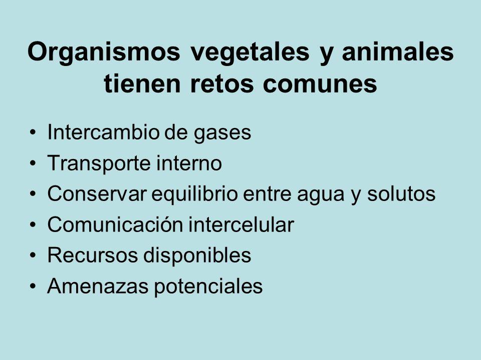 Organismos vegetales y animales tienen retos comunes Intercambio de gases Transporte interno Conservar equilibrio entre agua y solutos Comunicación in