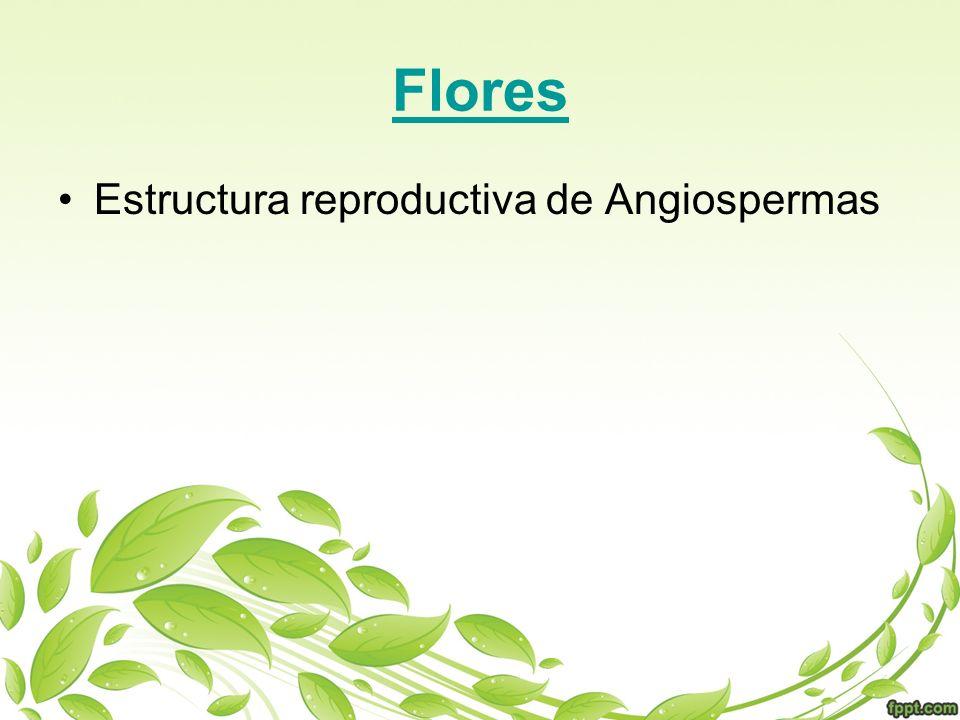 Flores Estructura reproductiva de Angiospermas