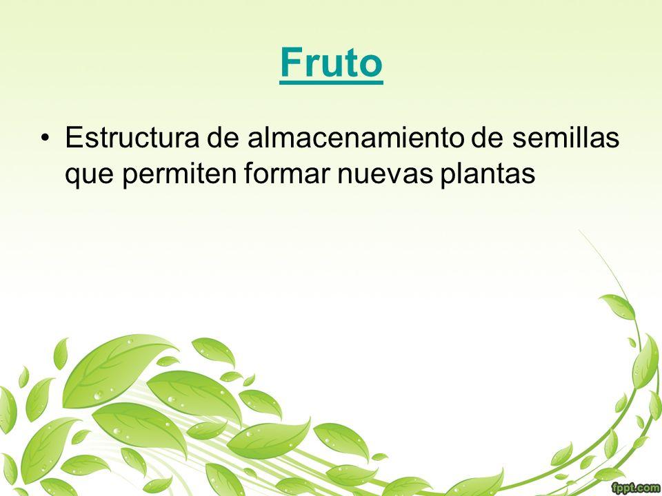Fruto Estructura de almacenamiento de semillas que permiten formar nuevas plantas