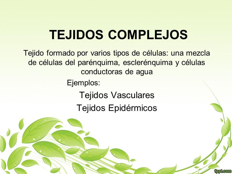 TEJIDOS COMPLEJOS Tejido formado por varios tipos de células: una mezcla de células del parénquima, esclerénquima y células conductoras de agua Ejempl