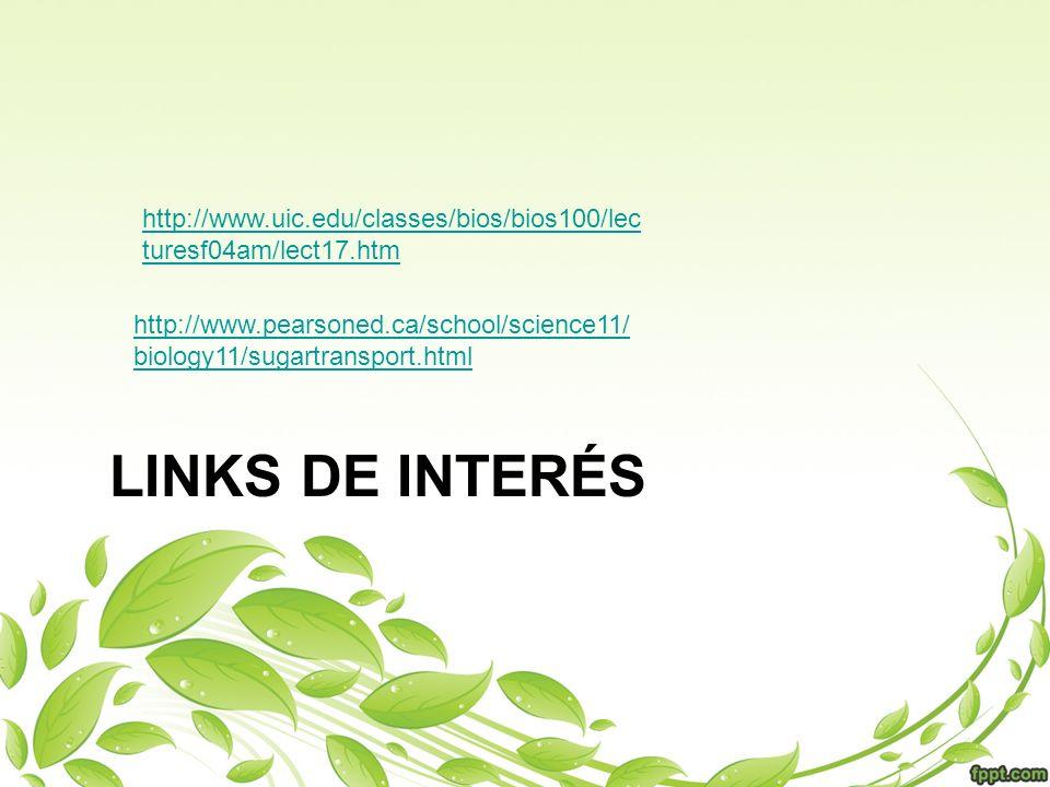 http://www.pearsoned.ca/school/science11/ biology11/sugartransport.html http://www.uic.edu/classes/bios/bios100/lec turesf04am/lect17.htm LINKS DE INT