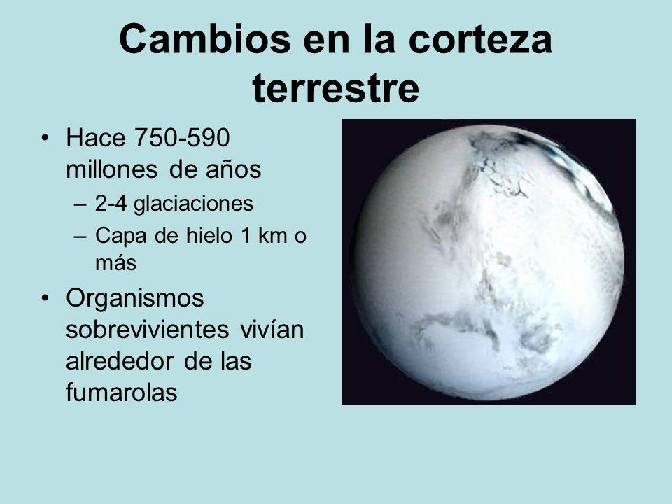 Cambios en la corteza terrestre Hace 750-590 millones de años –2-4 glaciaciones –Capa de hielo 1 km o más Organismos sobrevivientes vivían alrededor d