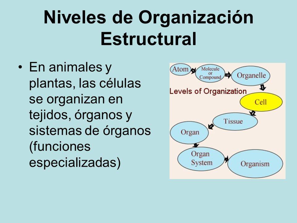 Niveles de Organización Estructural En animales y plantas, las células se organizan en tejidos, órganos y sistemas de órganos (funciones especializada
