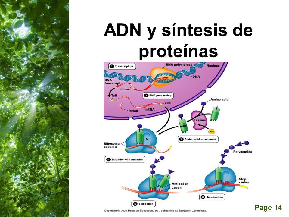 Page 14 ADN y síntesis de proteínas
