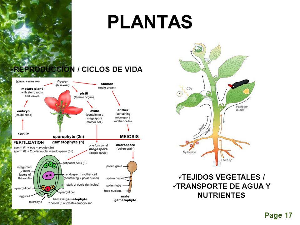 Page 17 PLANTAS TEJIDOS VEGETALES / TRANSPORTE DE AGUA Y NUTRIENTES REPRODUCCIÓN / CICLOS DE VIDA