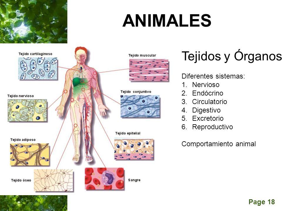 Page 18 ANIMALES Tejidos y Órganos Diferentes sistemas: 1.Nervioso 2.Endócrino 3.Circulatorio 4.Digestivo 5.Excretorio 6.Reproductivo Comportamiento a