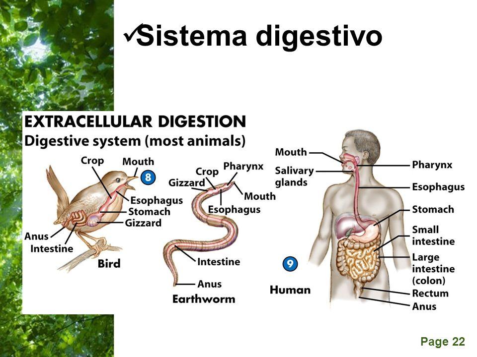 Page 22 Sistema digestivo