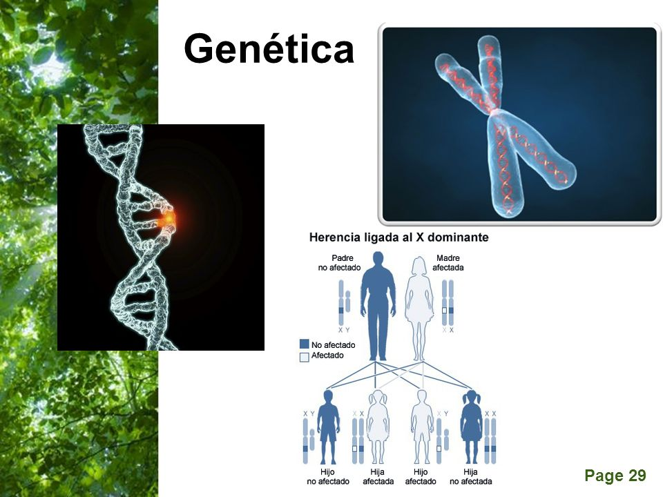 Page 29 Genética