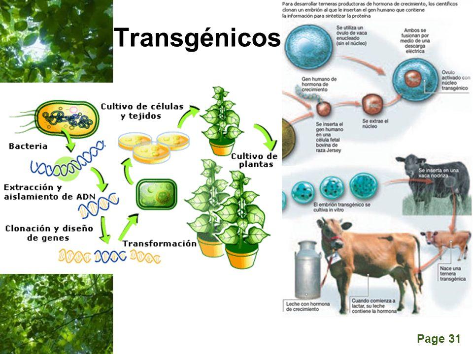 Page 31 Transgénicos