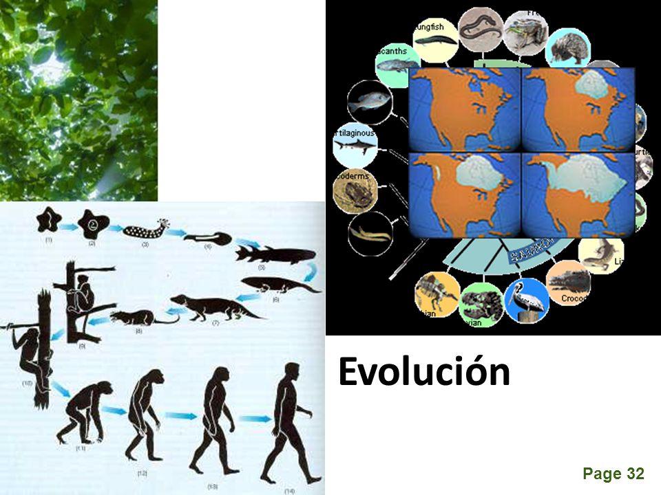 Page 32 Evolución