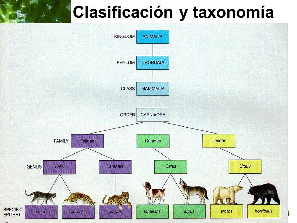 Page 34 Clasificación y taxonomía