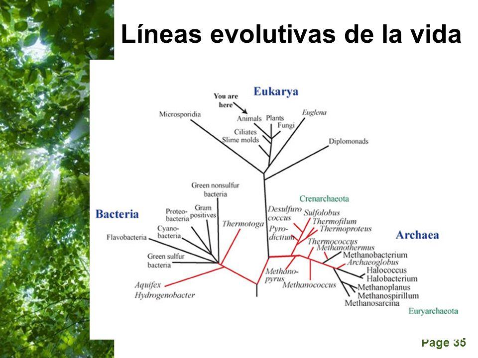 Page 35 Líneas evolutivas de la vida