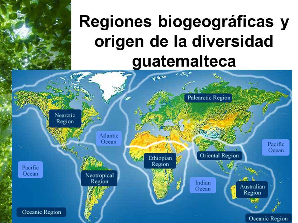 Page 38 Regiones biogeográficas y origen de la diversidad guatemalteca