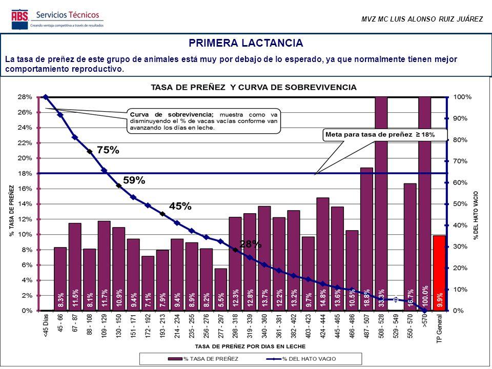 MVZ MC LUIS ALONSO RUIZ JUÁREZ PRIMERA LACTANCIA El porcentaje de animales preñados antes de los 150 días abiertos es muy bajo.