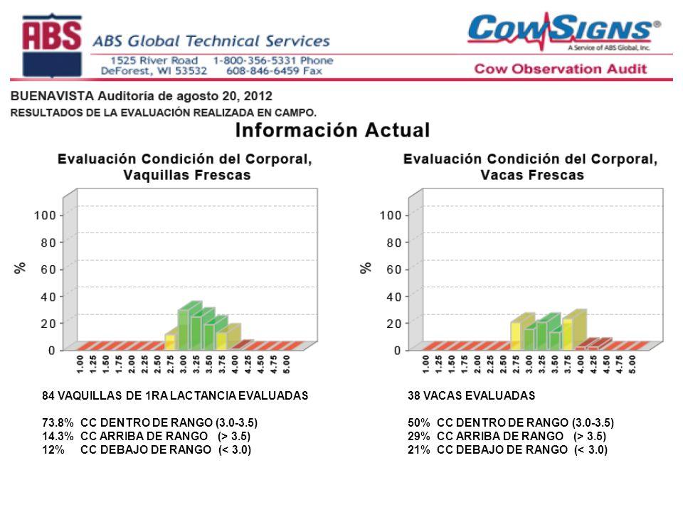 84 VAQUILLAS DE 1RA LACTANCIA EVALUADAS 73.8% CC DENTRO DE RANGO (3.0-3.5) 14.3% CC ARRIBA DE RANGO (> 3.5) 12% CC DEBAJO DE RANGO (< 3.0) 38 VACAS EV