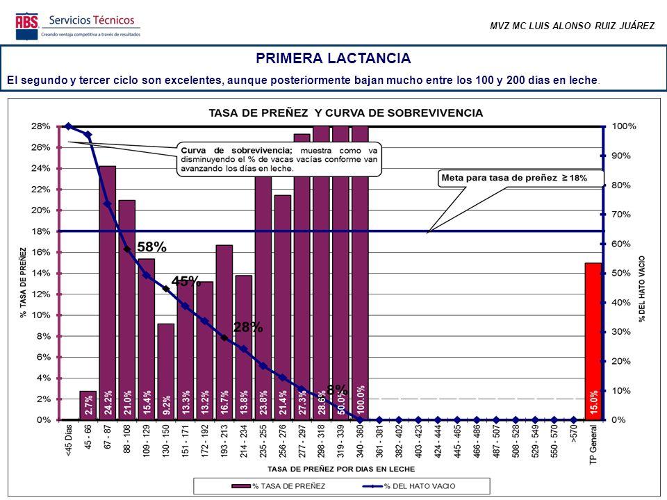 MVZ MC LUIS ALONSO RUIZ JUÁREZ PRIMERA LACTANCIA El segundo y tercer ciclo son excelentes, aunque posteriormente bajan mucho entre los 100 y 200 días en leche.