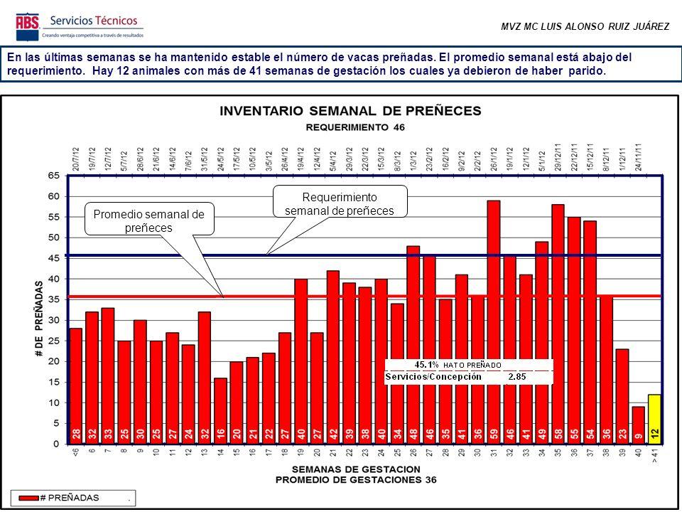 MVZ MC LUIS ALONSO RUIZ JUÁREZ En las últimas semanas se ha mantenido estable el número de vacas preñadas.