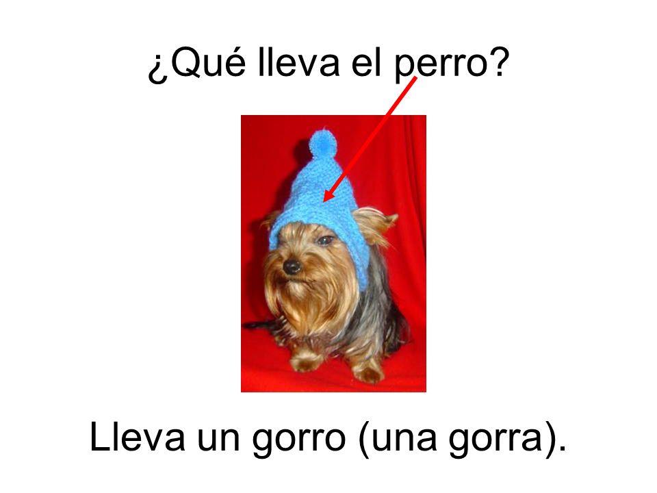 Lleva un gorro (una gorra). ¿Qué lleva el perro?