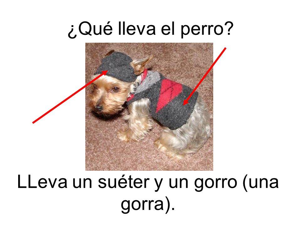 LLeva un suéter y un gorro (una gorra). ¿Qué lleva el perro?