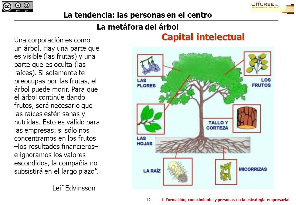 12 La metáfora del árbol Una corporación es como un árbol. Hay una parte que es visible (las frutas) y una parte que es oculta (las raíces). Si solame