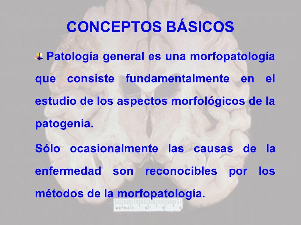 CONCEPTOS BÁSICOS Patología general es una morfopatología que consiste fundamentalmente en el estudio de los aspectos morfológicos de la patogenia. Só