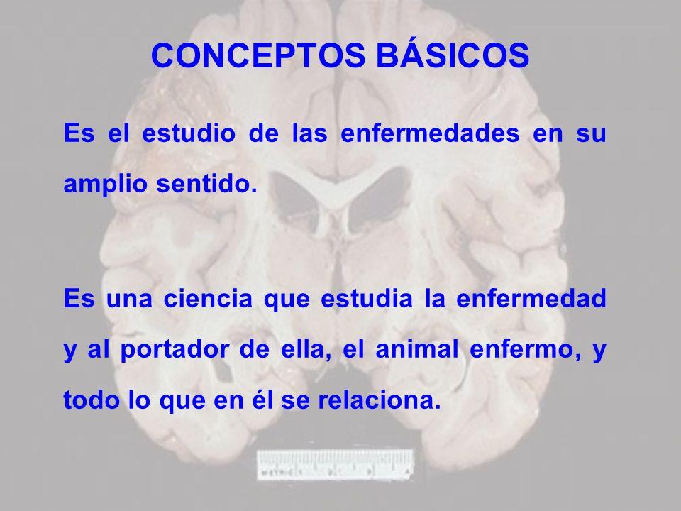 RESUMEN Sus ramas principales son la Patología General y la Patología Especial.