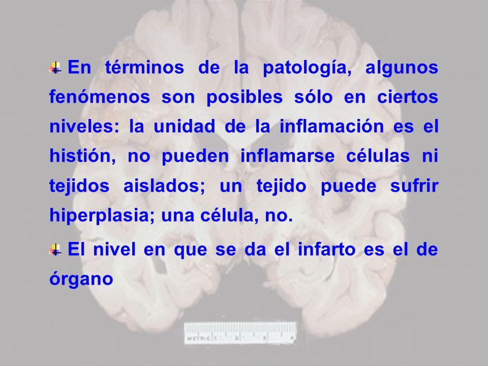 En términos de la patología, algunos fenómenos son posibles sólo en ciertos niveles: la unidad de la inflamación es el histión, no pueden inflamarse c