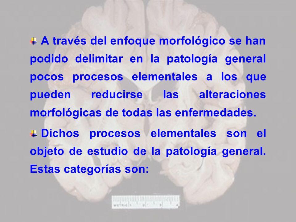 A través del enfoque morfológico se han podido delimitar en la patología general pocos procesos elementales a los que pueden reducirse las alteracione