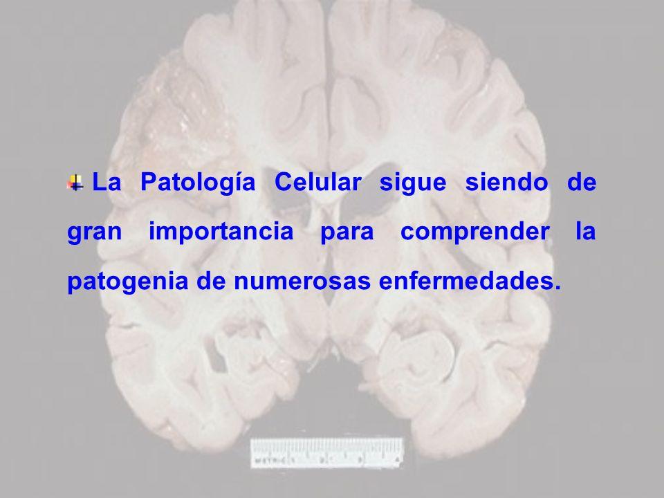 La Patología Celular sigue siendo de gran importancia para comprender la patogenia de numerosas enfermedades.