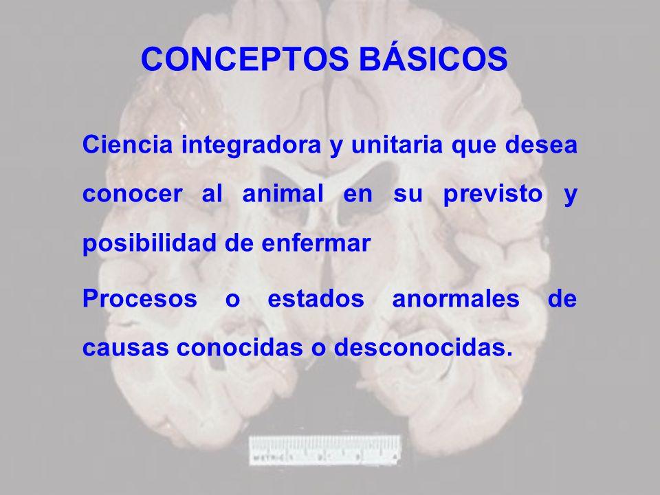 CONCEPTOS BÁSICOS Ciencia integradora y unitaria que desea conocer al animal en su previsto y posibilidad de enfermar Procesos o estados anormales de