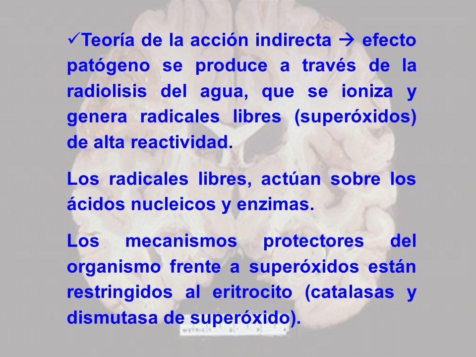 Teoría de la acción indirecta efecto patógeno se produce a través de la radiolisis del agua, que se ioniza y genera radicales libres (superóxidos) de