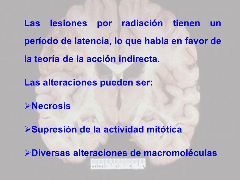Las lesiones por radiación tienen un período de latencia, lo que habla en favor de la teoría de la acción indirecta. Las alteraciones pueden ser: Necr