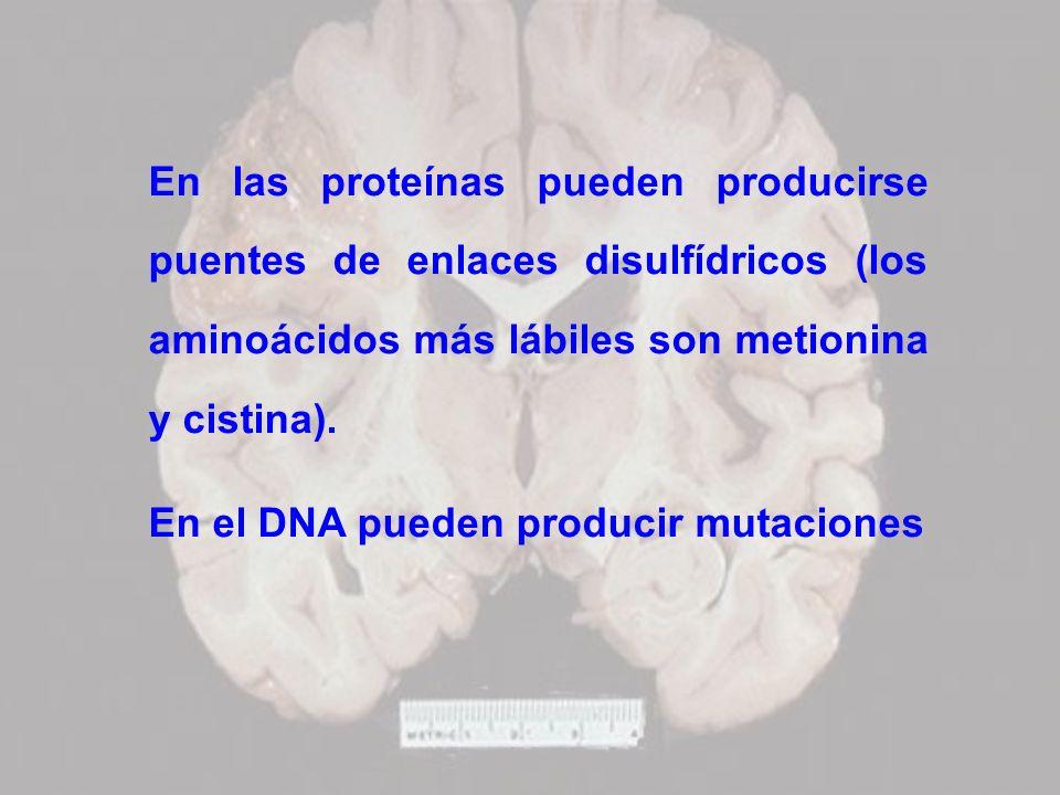 En las proteínas pueden producirse puentes de enlaces disulfídricos (los aminoácidos más lábiles son metionina y cistina). En el DNA pueden producir m