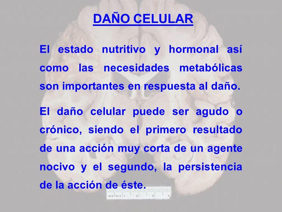 DAÑO CELULAR El estado nutritivo y hormonal así como las necesidades metabólicas son importantes en respuesta al daño. El daño celular puede ser agudo