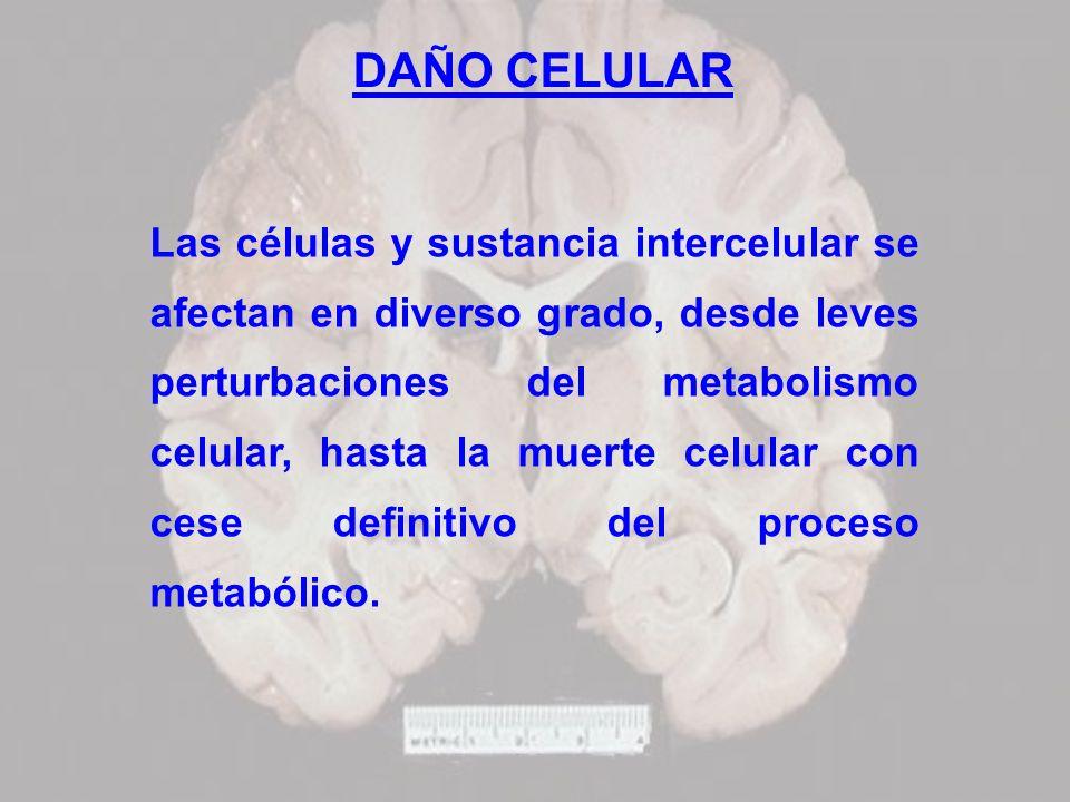 DAÑO CELULAR Las células y sustancia intercelular se afectan en diverso grado, desde leves perturbaciones del metabolismo celular, hasta la muerte cel